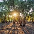 Botanical Garden in Rayong