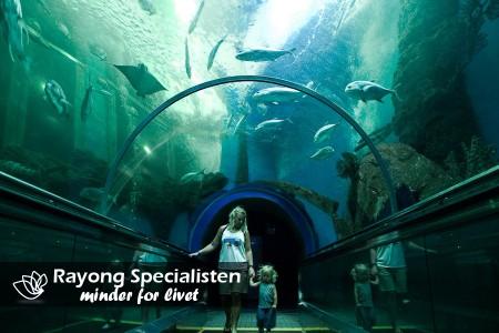 Rayong Aquarium i Ban Phe, Rayong